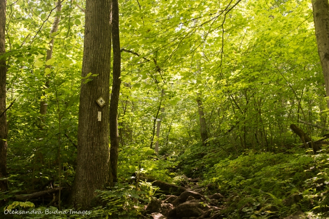 Bruce trail at Crawford Lake Conservation Area
