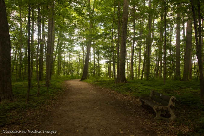 trail at Crawford Lake Conservation Area