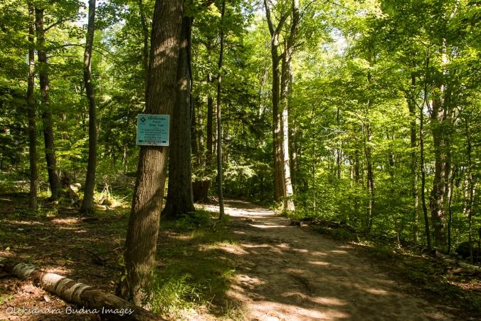 Rattlesnake Poitn side trail