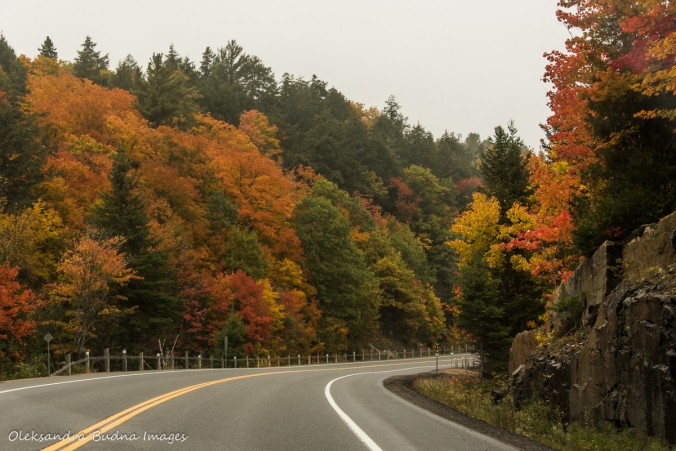 highway 60 in Algonquin in the fall