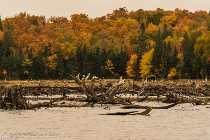 Parkside Bay in Algonquin in the fall