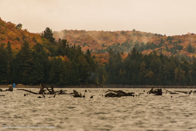 Rugged lake in Algonquin in the fall
