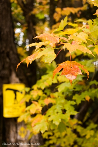 fall foliage with a portage sign in the background