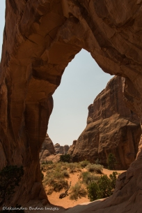 pine tree arch in Arches National Park