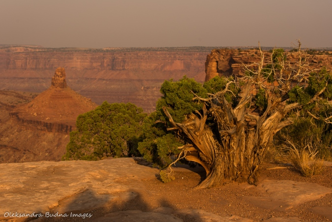 view in Dead Horse Point State Park