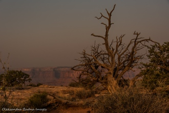 view in Dead Horse Point park in the morning