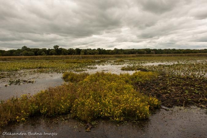 marsh in Point Pelee park