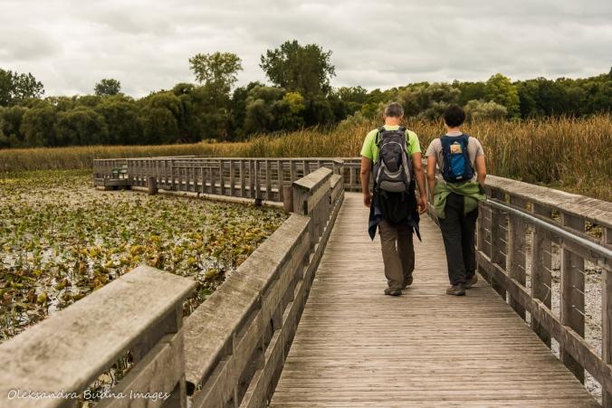 walking on marsh boardwalk in Point Pelee