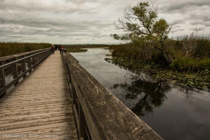 marsh boardwalk at Point Pelee
