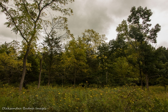 meadow and forest in Point Pelee National Park