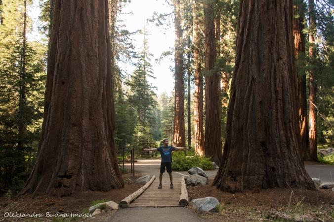between two gian sequoias in Sequoia National Park