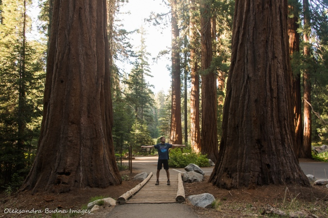 between two gian sequoias in Sequoia National Park