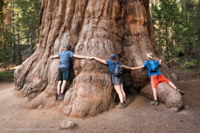 hugging a sequoia in Sequoia National Park