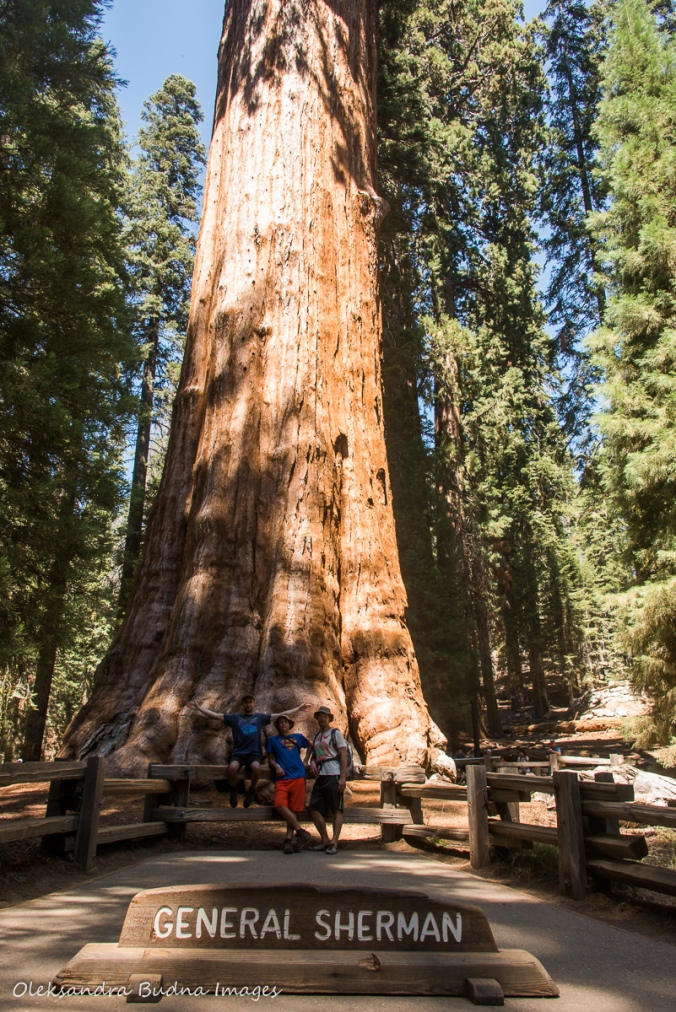 in front of General Sherman tree in Sequoia National Park in California