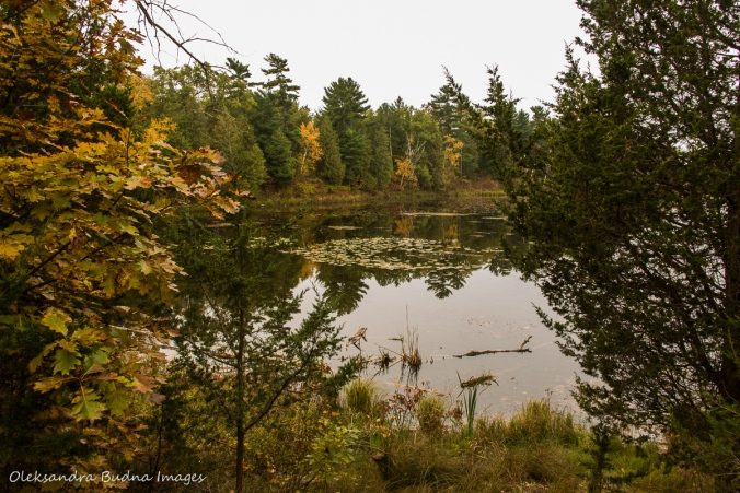 Old ausable Channel in Pinery in the fall