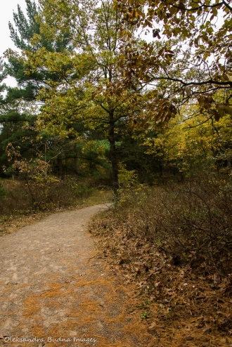 Cedar Trail at Pinery in the fall