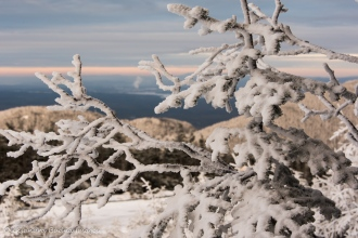 snow frozen around tree branches at Parc national du Mont-Mégantic