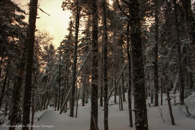 setting sun in the winter forest at Parc national du Mont-Mégantic