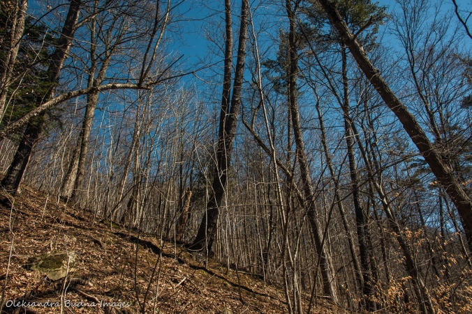 forest along Bruce Trail in the spring