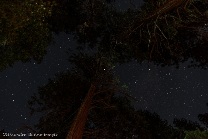 starry sky at Yosemite