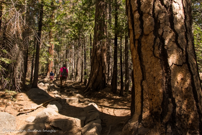 hiking the Half Dome trail at Yosemite