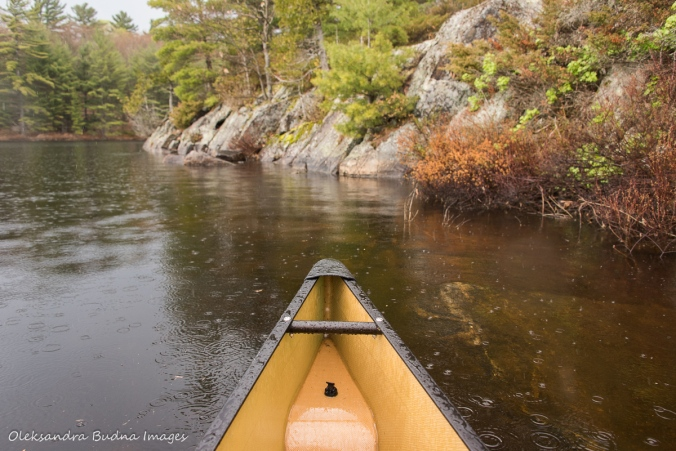 rain on Spider Lake at The Massasauga