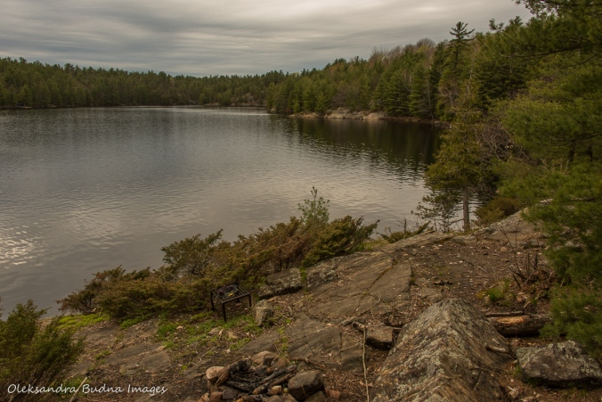 view from site 24 on Spider lake in the Massasauga