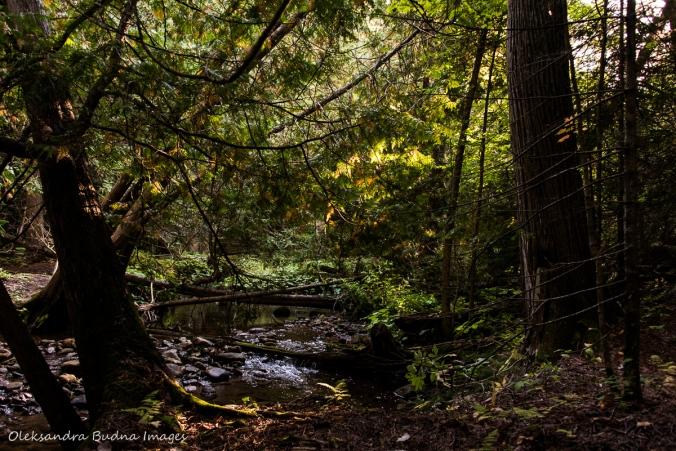 creek at Hockley Valley