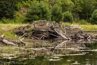 beaver lodge on Howry Creek in Killarney