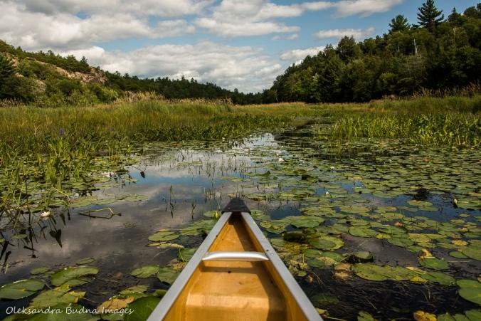 paddling on Howry Creek in Killarney