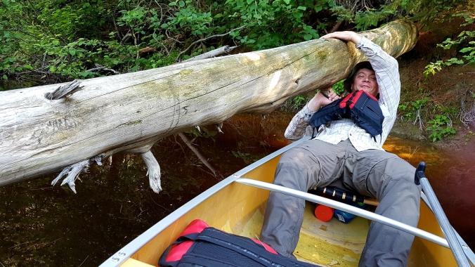 paddling under a log on Kirk Creek in Killarney