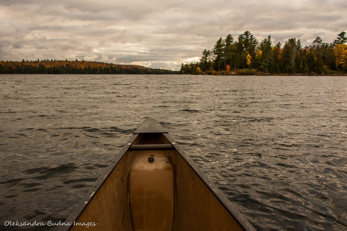 paddling on Lake Louisa in Algonquin