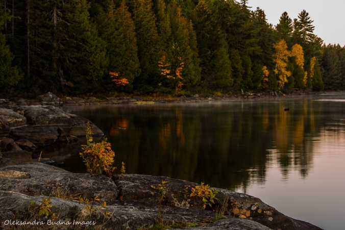 early morning over Lake Louisa in Algonquin