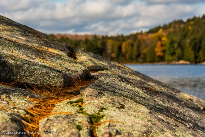 fall in Algonquin
