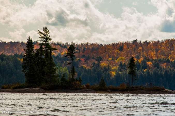 Lake Louisa in Algonquin in the fall