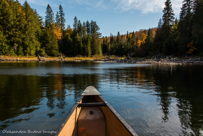 paddling on Lake Louisa in Algonquin