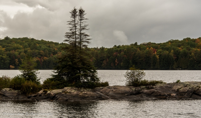island at Silent Lake: view from Lakeshore Trail