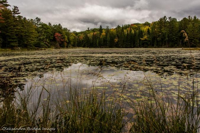 views along Lakeshore Trail at Silent Lake