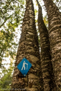trail marker on Lakeshore Trail at Silent Lake