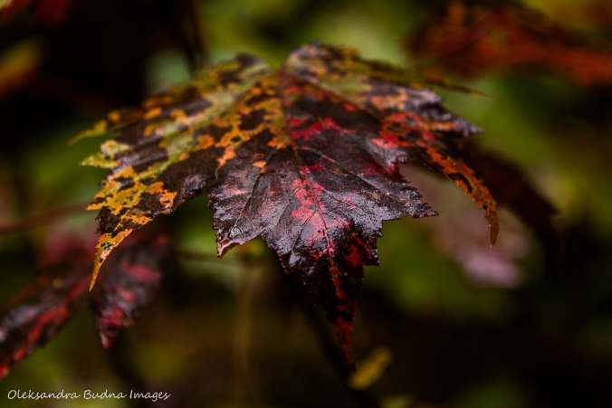 fall at Silent Lake