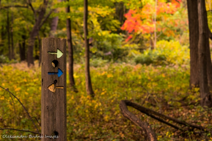 trail marker at Ojibway part in Windsor