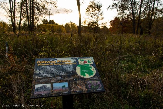 ojibway prairie provincial nature reserve
