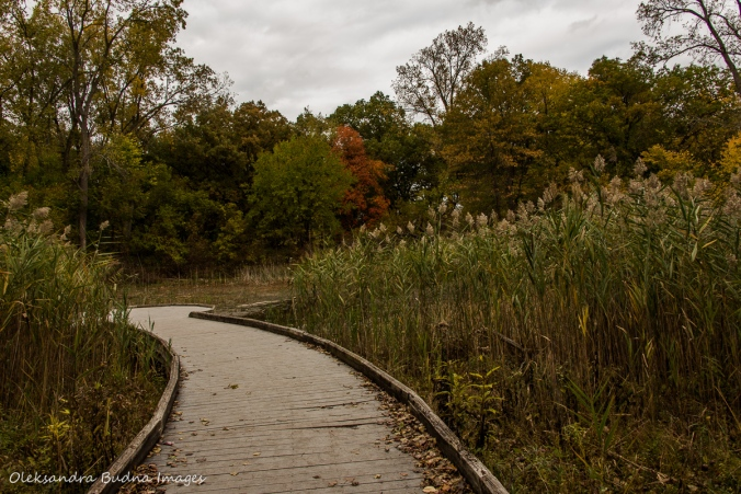 marsh at Ojibway park in Windsor