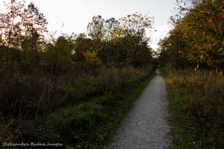 trail at Ojibway Prairie Nature Reserve in Windsor
