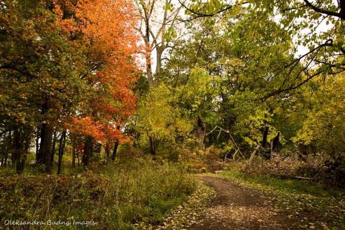 woodland at Ojibway park