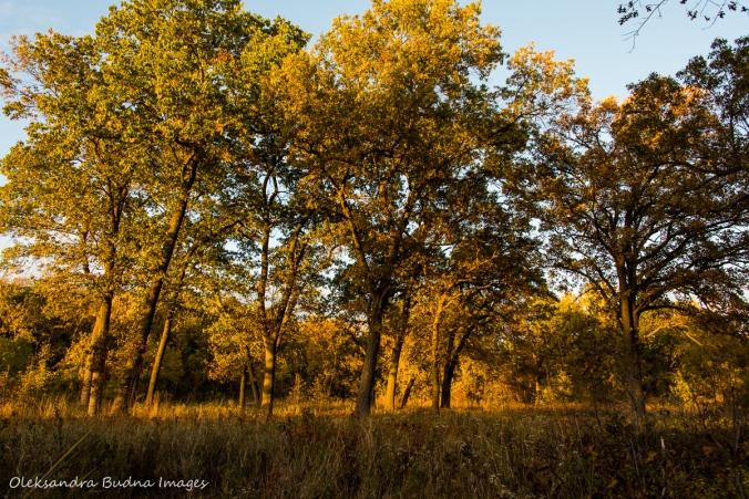 Ojibway Prairie Nature Reserve in Windsor