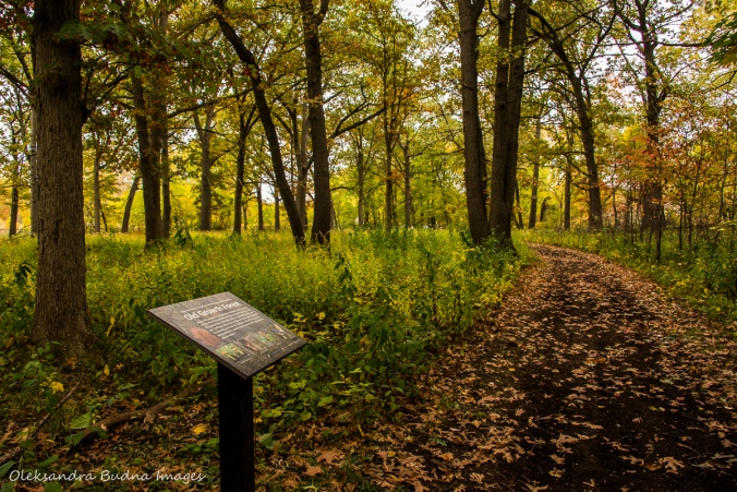 old growth oak forest at Ojibway Park in Widnsor