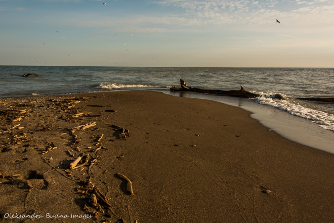 the tip at Point Pelee National Park