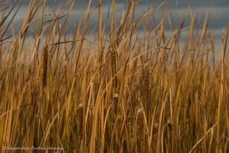 marsh at Point Pelee National Park
