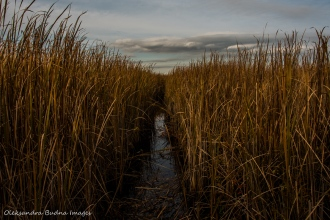 marsh at Point Pelee National Park